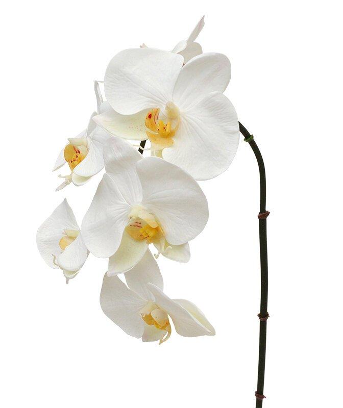 Umelá vetva orchidea Phalaenopsis 55 cm biela