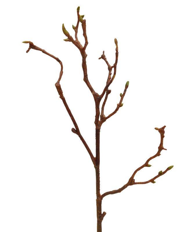 Umělá větev ze dřeva Magnolia 50 cm