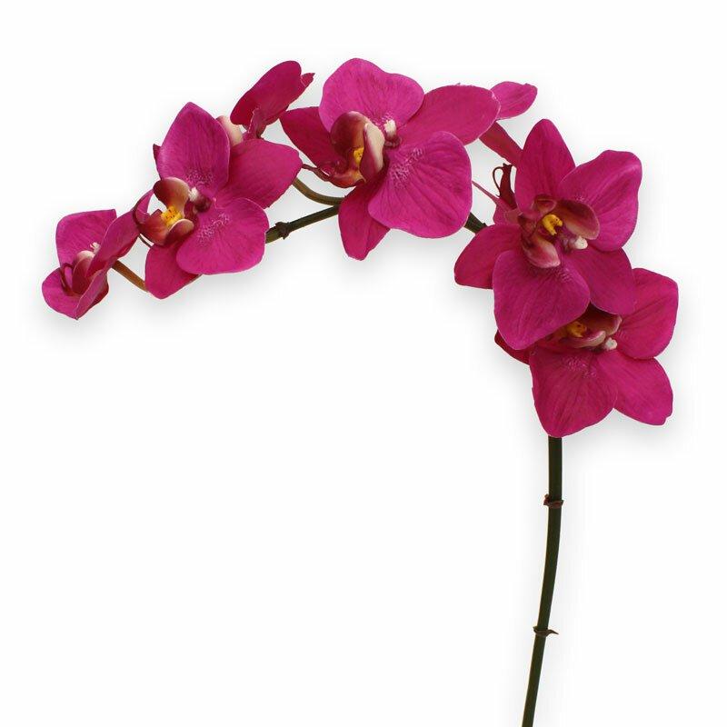 Umělá Orchidea Phalaenopsis 80 cm - fialová