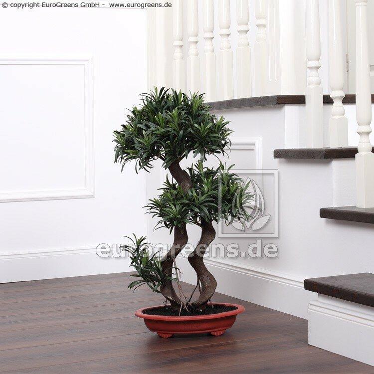 Umelý Podocarpus bonsai 65 cm - 2 korunky listov