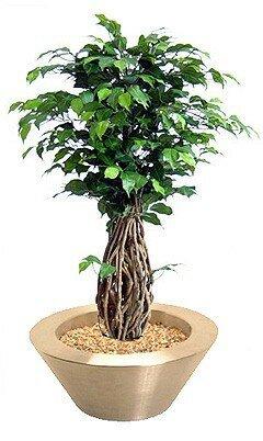 Umělý Bonsai Ficus Liana 100 cm