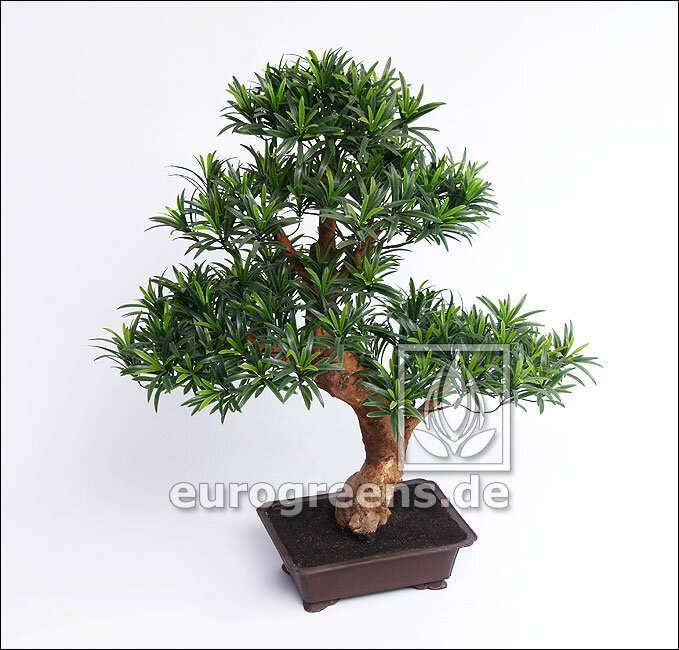 Umělý bonsai Podocarpus 80 cm