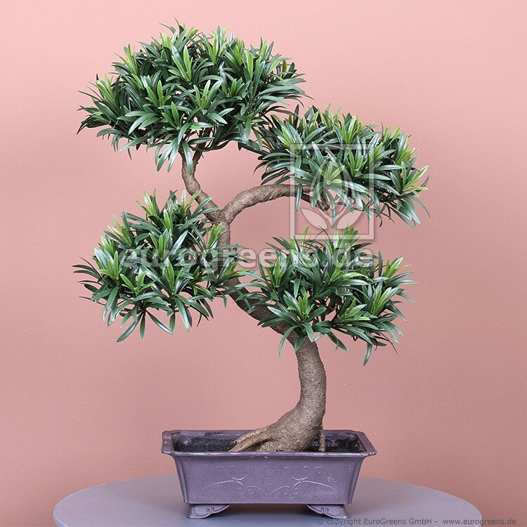 Umělý Bonsai Podocarpus 65 cm