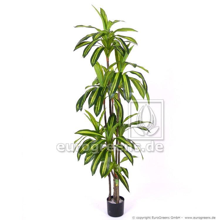 Umelá rastlina Dracéna Massangeana 200 cm