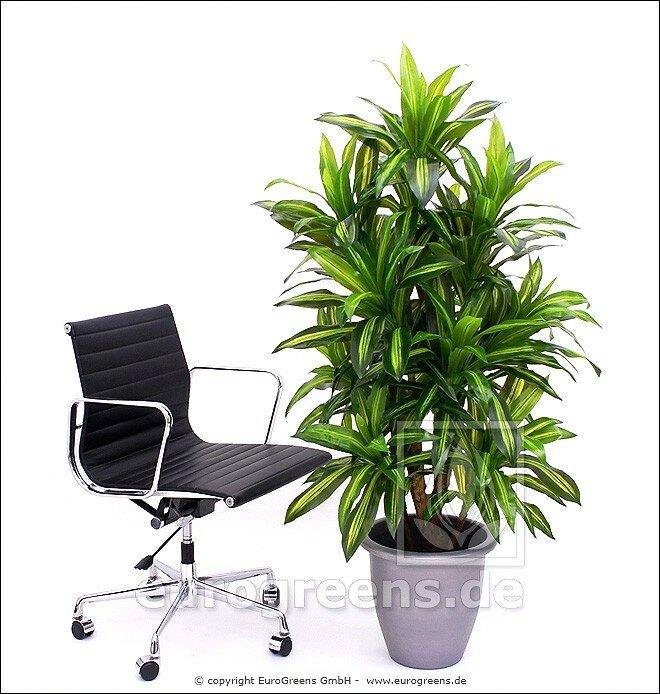 Umělá rostlina Dracena Massangeana 160 cm