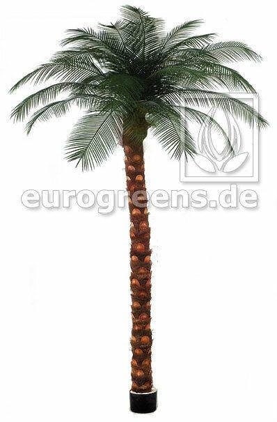 Umělá palma Phönix 300-325cm