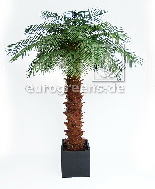 Umělá palma olejová 200 cm