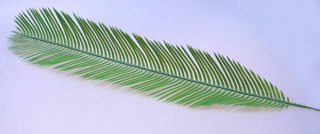 Umelý palmový list Cycas 45 cm