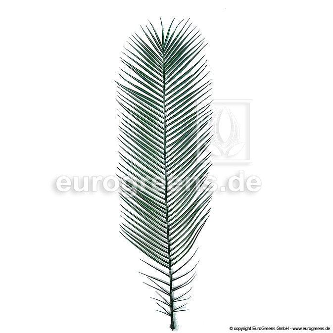 Plastový palmový list Phoenix 100 cm