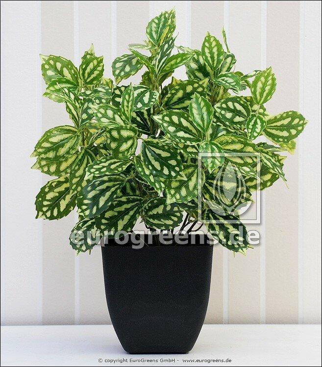 Umelá rastlina peperomia zeleno smotanové listy