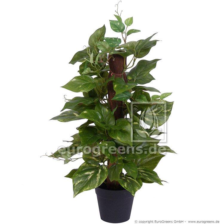 Umělá rostlina Potos 50 cm