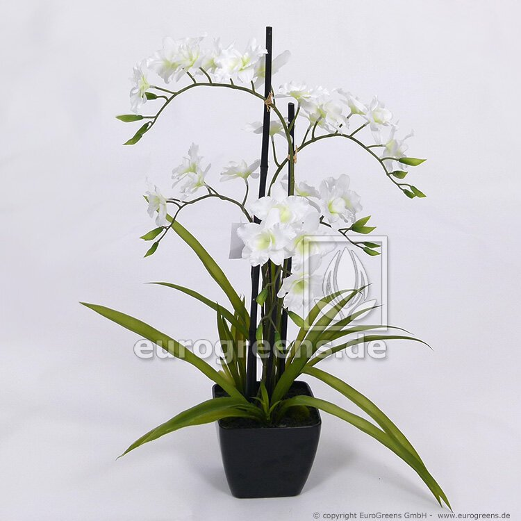 Umelá biela Orchidea v čiernej nádobe 70 cm