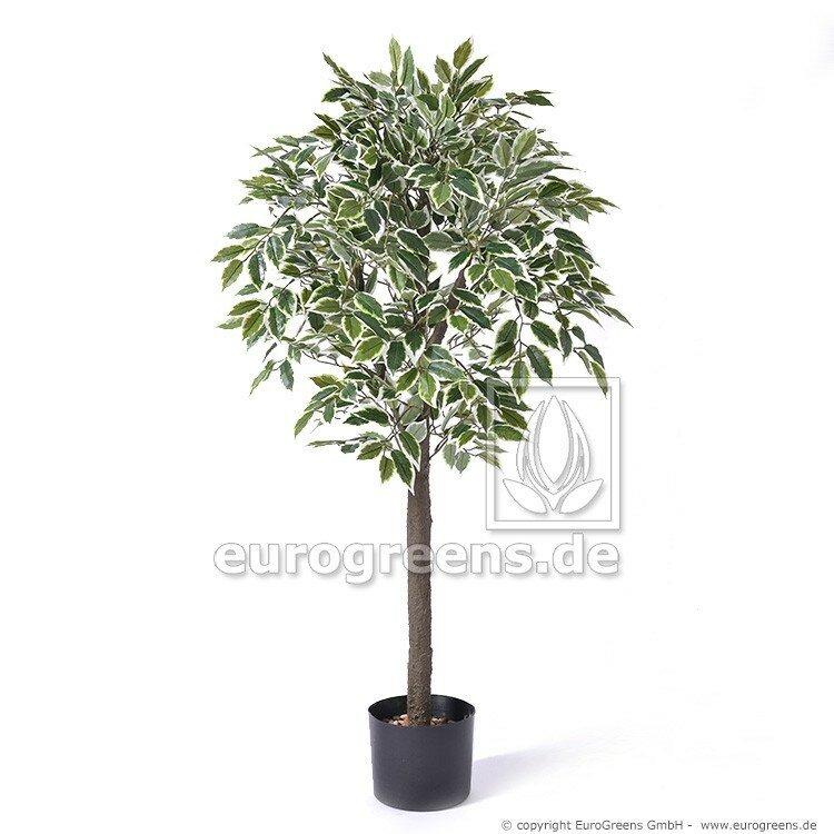 Umělý strom Jade Ficus - zeleno krémový 90 cm
