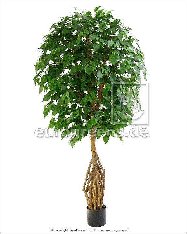 Umělý Mangrovový Fikus 160 - 170 cm