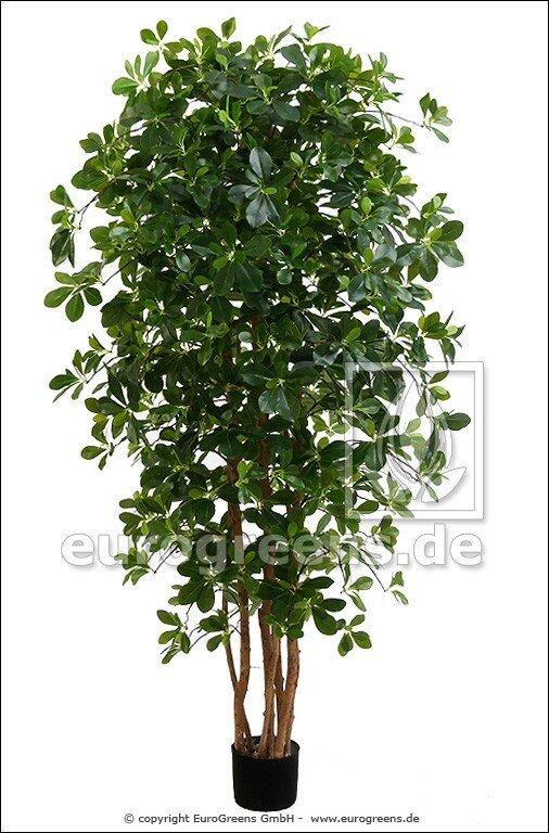 Umelá rastlina orientálny Fikus 190 cm