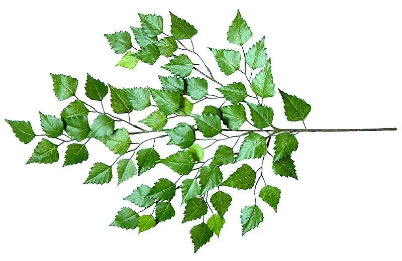 Umělá větev  Bříza - 60 cm vysoká