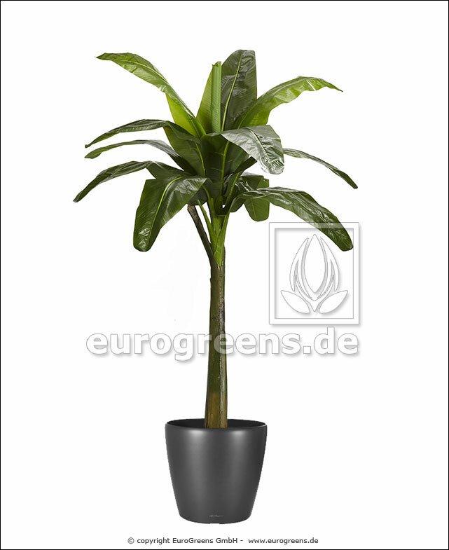 Umělý strom Banánovník 240 cm