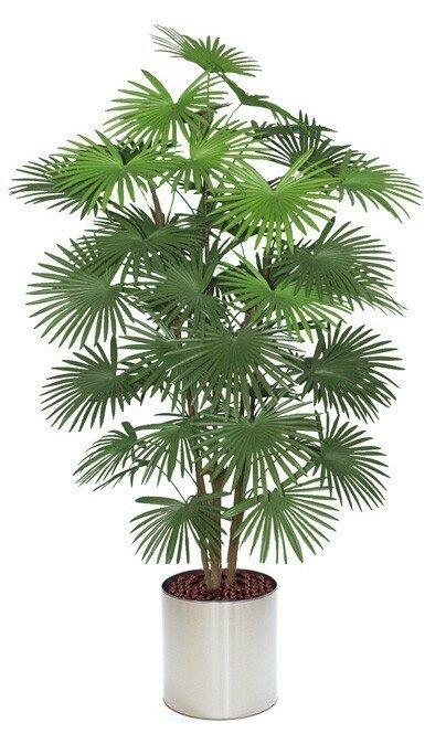 Umělá palma vějířovité listy 160 - 175 cm
