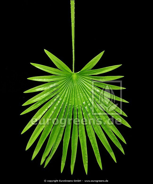 Umělý list palma Livistona 70 cm