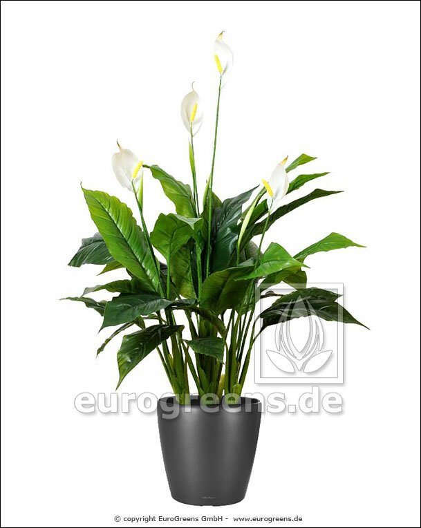Umělá rostlina Lopatkovec 100 cm