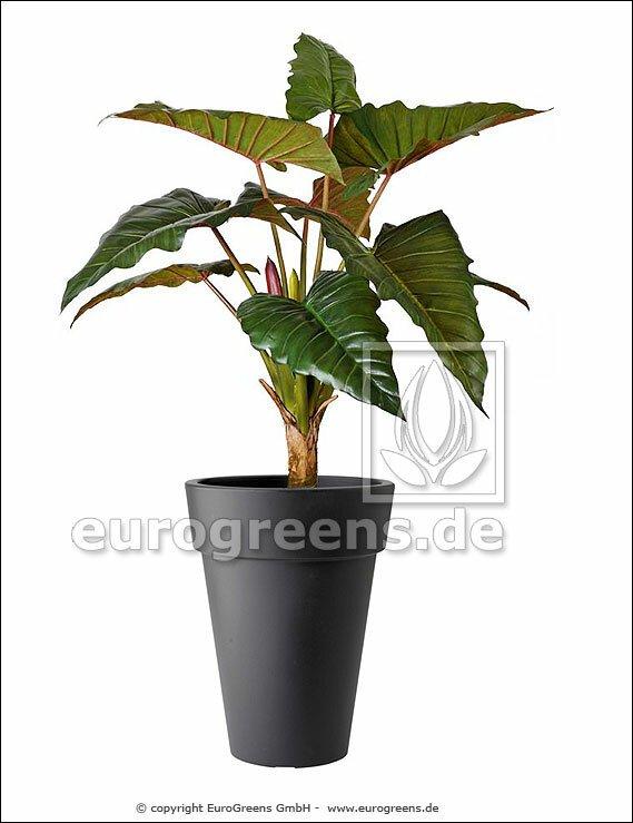 Umelá rastlina Alokázia 170 cm