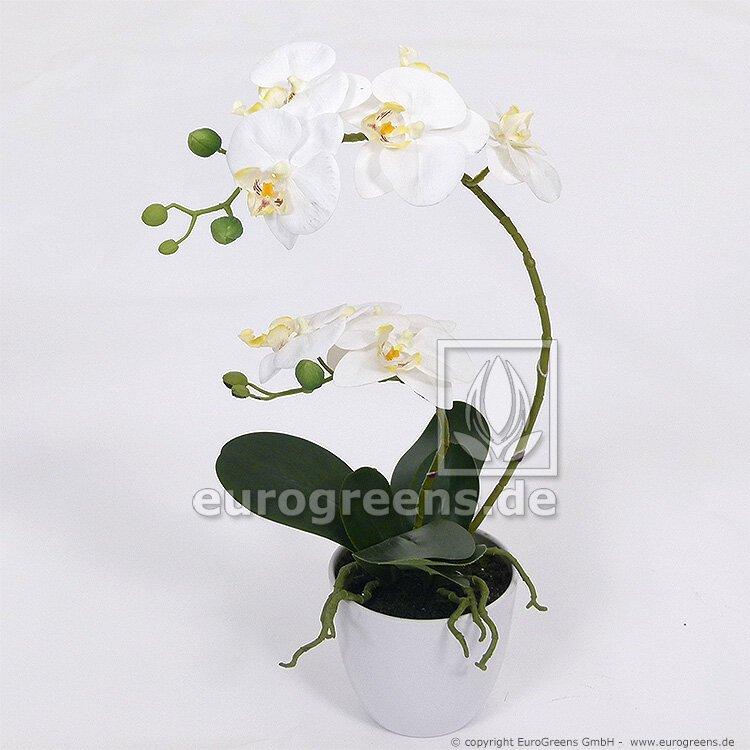 Umělá bílá Orchidea v květináči 60 cm