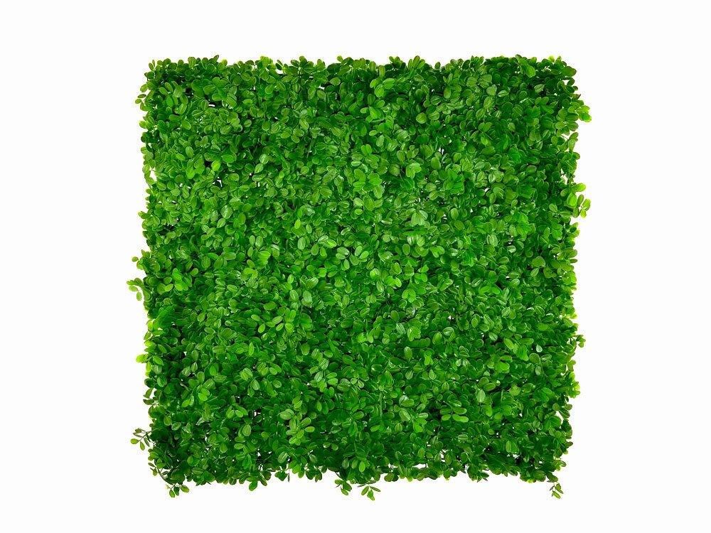 Umelý živý listnatý panel Ficus Microcarpa - 50x50cm