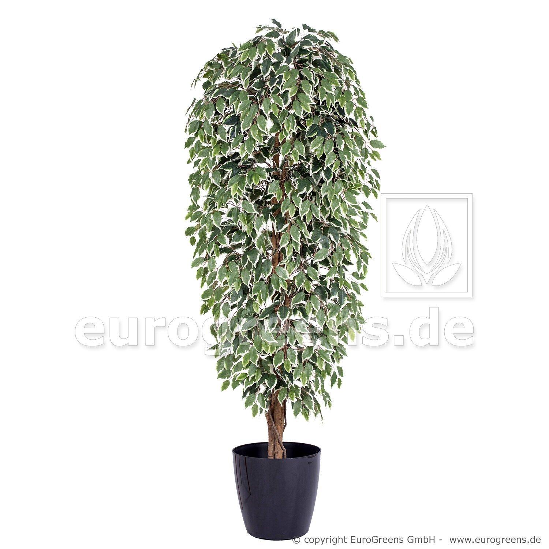 Umělá rostlina Fíkus Exotica 210 cm