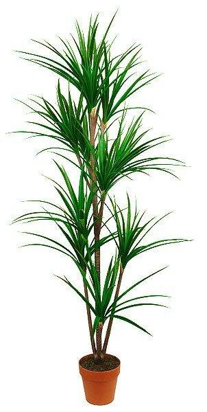 Umelá rastlina Dracéna Marginata 170 cm