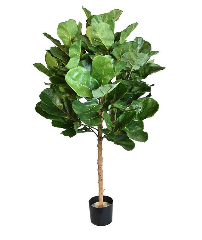 Umělá rostlina Royal lyrata 105 cm