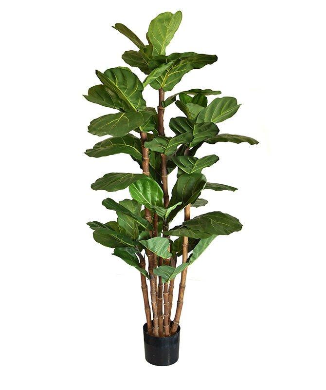 Umelá rastlina Lyrata 165 cm
