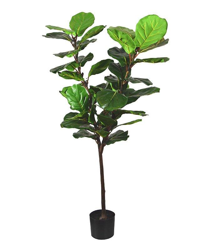 Umělá rostlina lyrata 150 cm