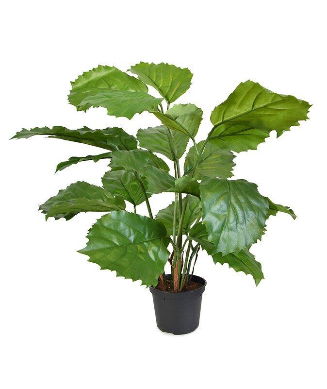 Umělá rostlina Tetrastigma 40 cm