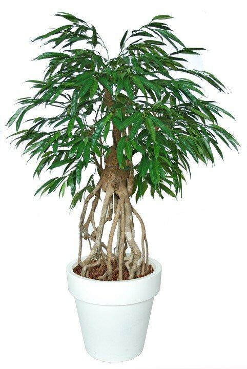 Umelý strom Longifolia Everglades (160cm)