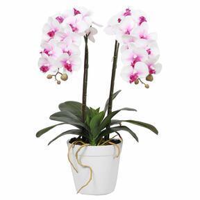 Umelá Orchidea 43 cm