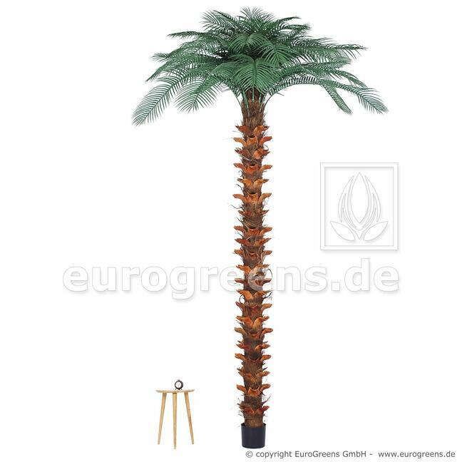Umelá palma Butia capitata 300 cm