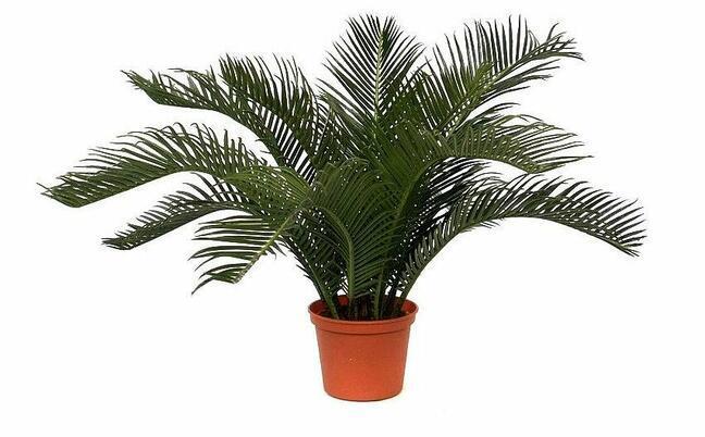 Umelá palma Cycas 50 cm