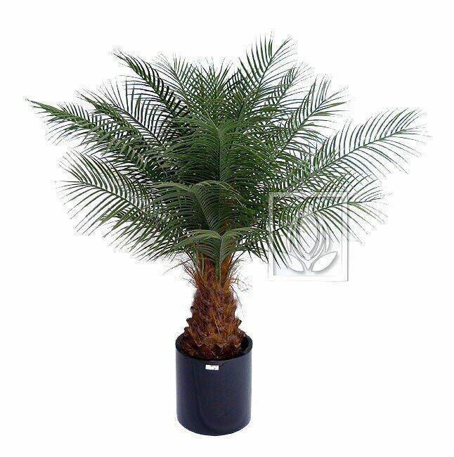 Umelá palma Datľová 170 cm