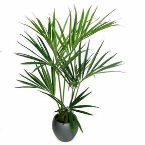 Umelá palma Kentia 135 cm
