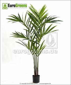 Umelá palma Kentia 170 cm