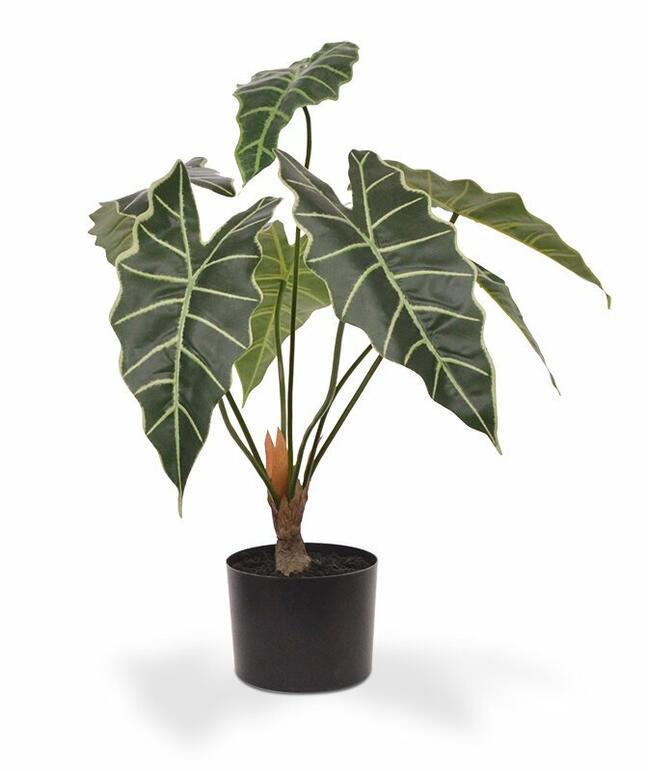 Umelá rastlina Alokázia Amazonica 60 cm