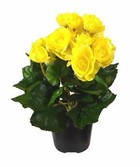 Umelá rastlina Begónia žltá 25 cm