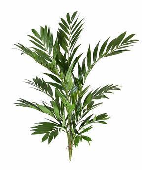 Umelá rastlina Chamédorea úhľadná 90 cm