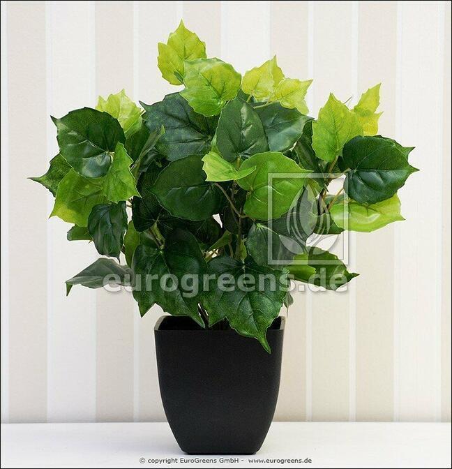 Umelá rastlina Cisus 40 cm