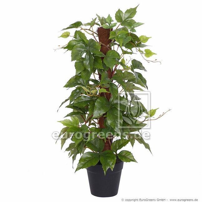 Umelá rastlina divoký Vinič na Sisalovej palici 50 cm