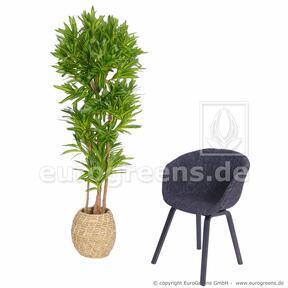 Umelá rastlina Dracéna Compacta 170 cm