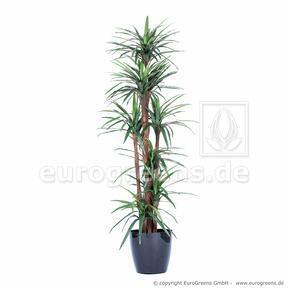 Umelá rastlina Dracéna lemovaná 200 cm