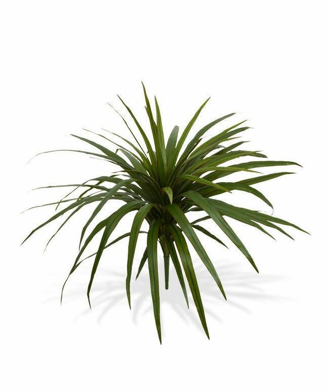 Umelá rastlina Dracéna lemovaná 50 cm