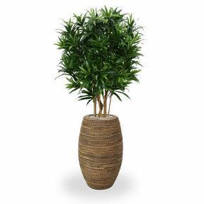 Umelá rastlina Dracéna reflexa 150 cm