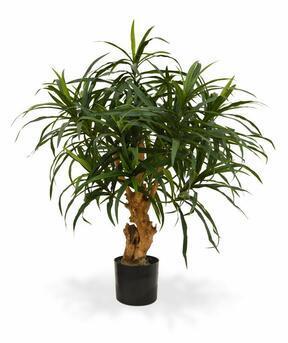 Umelá rastlina Dracéna reflexa 75 cm